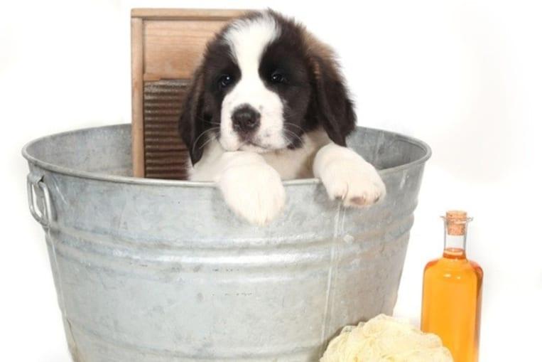 Lavare il cane con detersivo per piatti