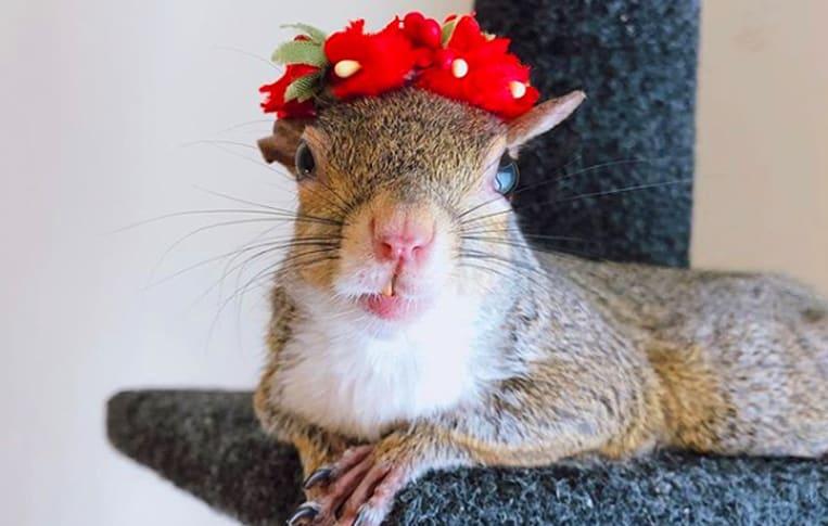 Lo scoiattolo Jill ama la moda e posa per la macchina fotografica