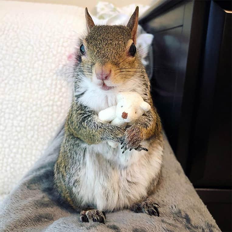 Jill lo scoiattolo e il suo orsacchiotto