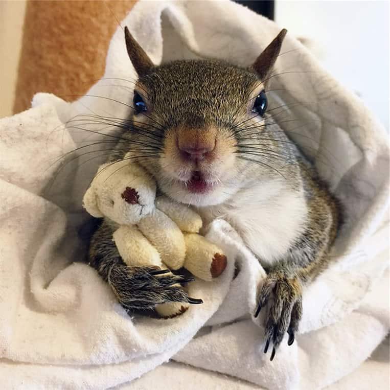 Jill lo scoiattolo non lascia mai il suo orsacchiotto