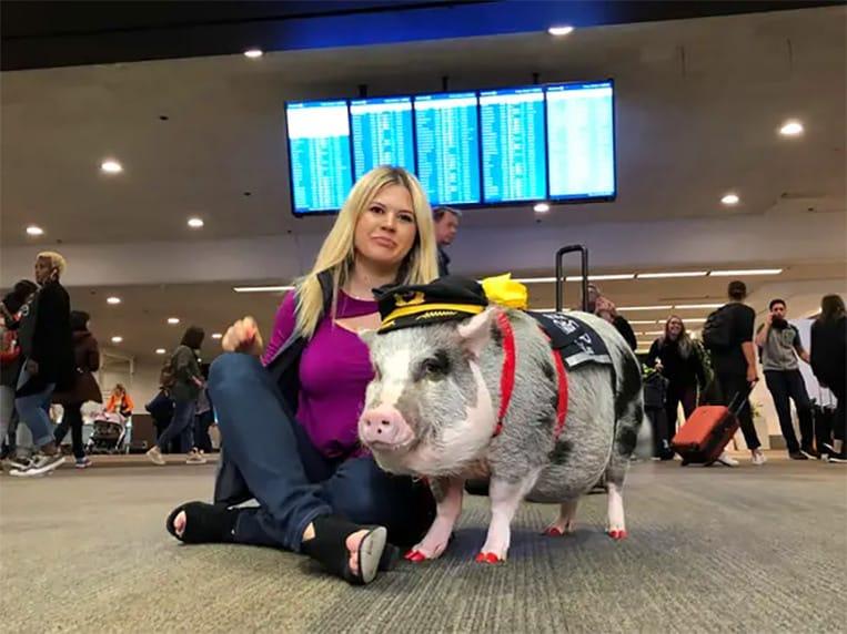 Lilou allevia i passeggeri stressati nell'aeroporto di San Francisco