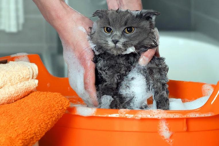 Lavare un gatto con shampoo umano